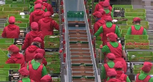 Bio low-cost, usine.