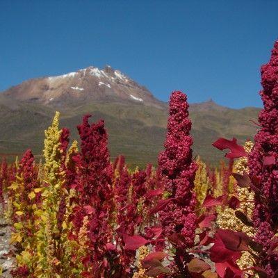 ANAPQUI, BOLIVIA
